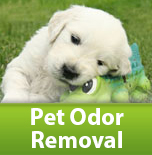 Pet Stain and Odor Removal Portland